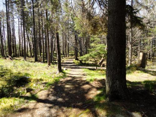 sentier au forêt | forest pathway