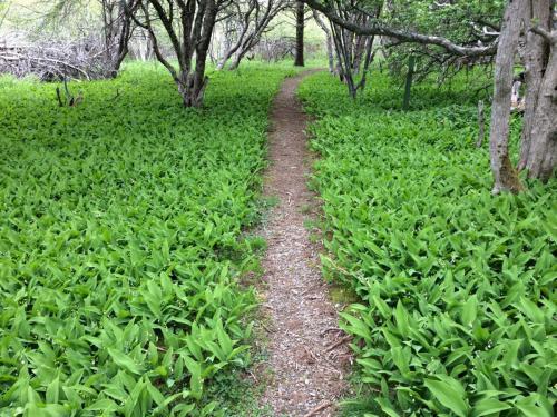 Le Petit Bois en juin | Le Petit Bois in June