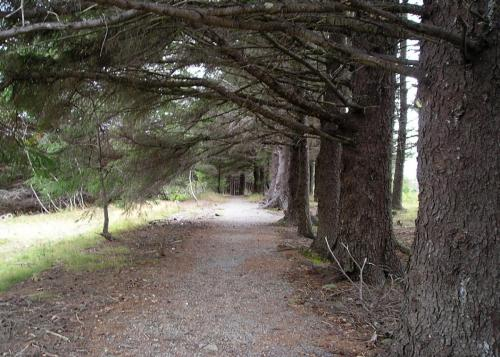 sentier | path